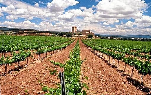 Expertos comprueban en campos españoles la efectividad de las aves insectívoras como alternativa a los plaguicidas