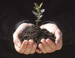Programa 'Crece con tu árbol'