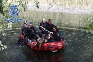 Los perros son adiestrados para localizar personas en el agua.