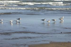 Aves en la playa.