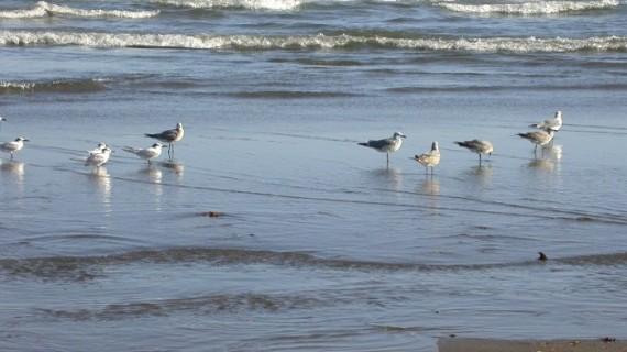 Crean un Observatorio de Aves en la playa de La Punta en Valencia