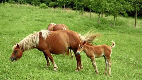 Desarticulada una red que falsificaba el fallecimiento de caballos para estafar a las aseguradoras