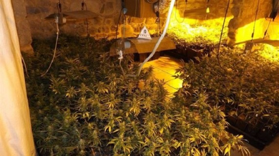 Desmantelan una plantación de marihuana en una masía de Cardona