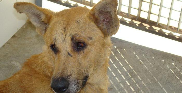 Campaña obligatoria y gratuita de vacunación contra la rabia para perros, gatos y hurones en Ceuta