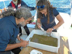 Científicos localizaron este protozoo en la costa de Murcia. / Foto: CSIC y Oceana