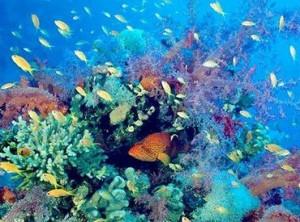 Biodiversidad. / http://www.ecologismo.com