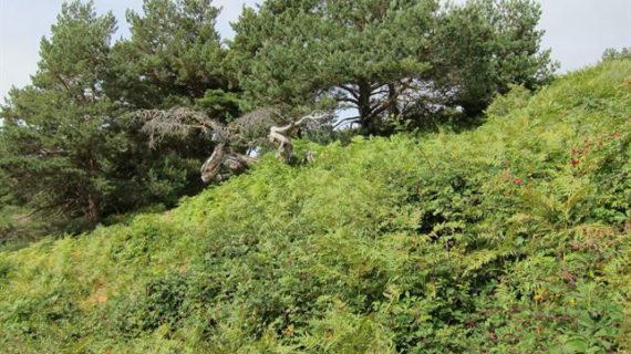Aprueban un plan para fomentar la biodiversidad y el turismo de naturaleza