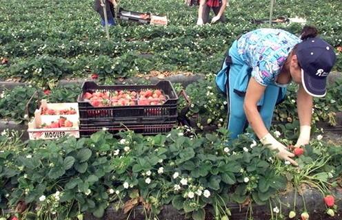 El Gobierno modifica las bases para la concesión de subvenciones a la promoción de las mujeres en el medio rural