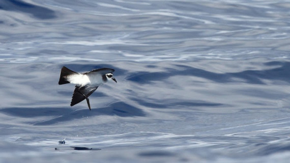 Un 8% de los mares de España forma parte de la Red Natura 2000