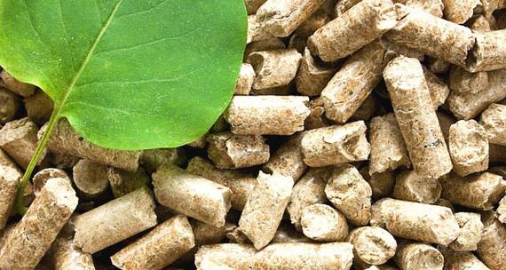 Lanzan un plan de generación con biomasa en las Islas Canarias