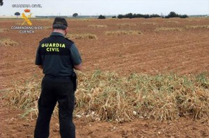 La Guardia Civil ha llevado a cabo vigilancias en los campos.