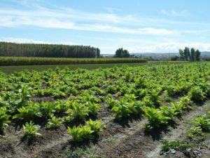 Cúllar Vega era un pueblo eminentemente agrícola.