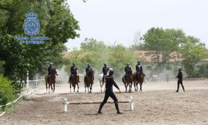 Entrenamiento de los equinos de la Policía.