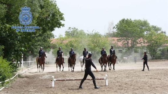 Los caballos de la Policía Nacional, preparados para situaciones de riesgo