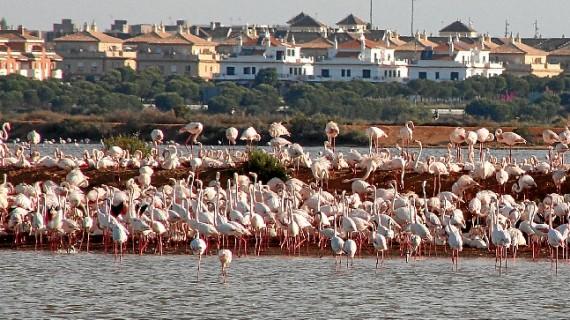 Andalucía celebra el Día Mundial del Medio Ambiente con un amplio programa de actividades