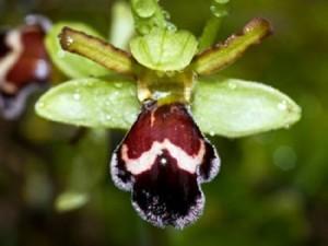 Gracias al proyecto, se han encontrado orquídeas que hace años no se veían. / Foto: www.agentesforestales.org.
