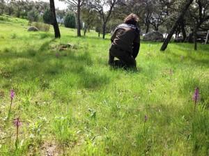 Un agente junto a una población detectada al norte de Madrid. / Foto: www.agentesforestales.org.
