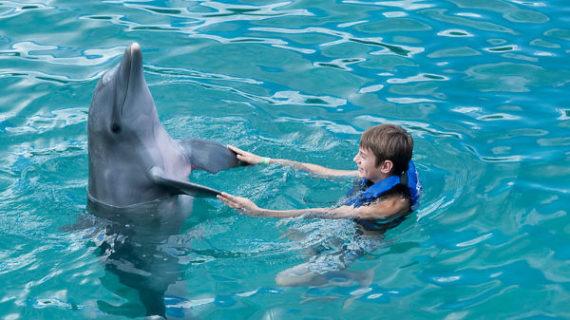 Las ventajas de la delfinoterapia en niños con Autismo