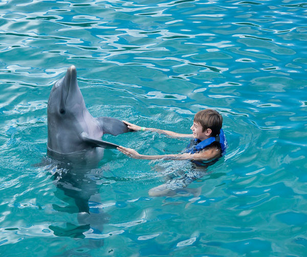 Terapia con delfines.