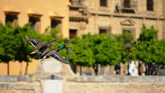 SEO/BirdLife premia tres fotografías de aves realizadas en tres ciudades Patrimonio de la Humanidad