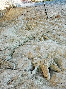Huellas en el yacimiento de Costalomo. / Foto: http://icnitasdinosaurio.mcu.es/
