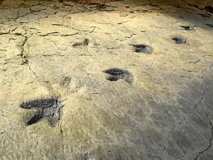 Huellas del yacimiento de Cayos. / Foto: http://icnitasdinosaurio.mcu.es/