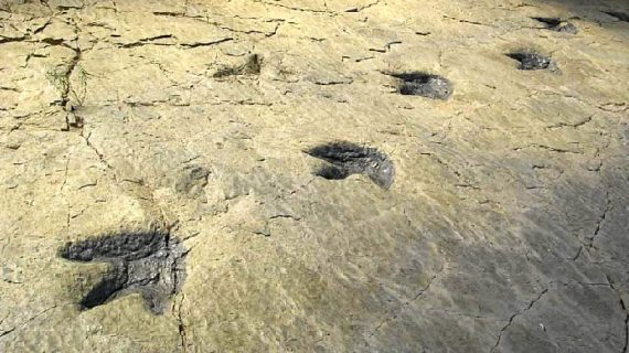 Las rutas de las icnitas: tras la huella de los dinosaurios en la Península Ibérica