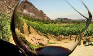 El Club de Producto Rutas del Vino de España reúne actualmente a 22 Rutas Certificadas. / Foto: riberadelguadiana.eu