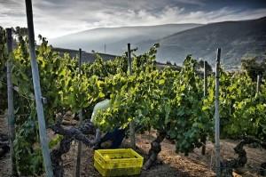 La temporada favorita para realizar enoturismo sigue siendo el otoño y la época de vendimia. / Foto: vinetur.com