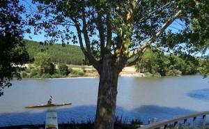 El Pisuerga acoge esta esperada cita. / Foto: Oficina de Turismo de Palencia