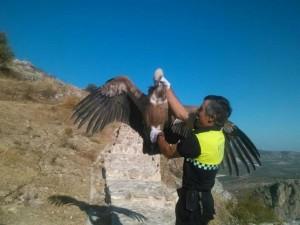 Un agente logra coger al animal.
