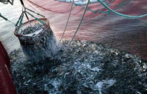 Agricultura establece un plan de gestión para los barcos que faenan en el caladero comunitario