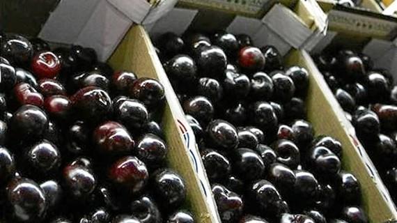 Bruselas da luz verde a un paquete de 125 millones en ayudas al sector de frutas y hortalizas por el veto ruso