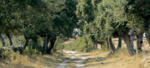 Camino de la Senda del Duero. / Foto: magrama.gob.es