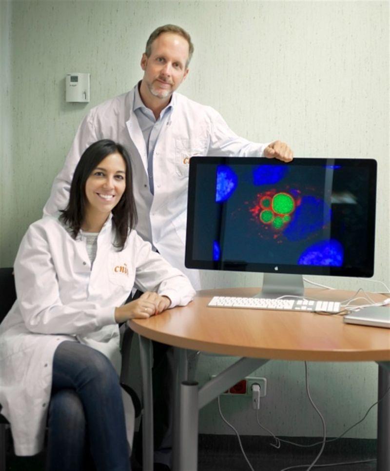 Descubren unas células fluroescentes responsables del desarrollo de los tumores