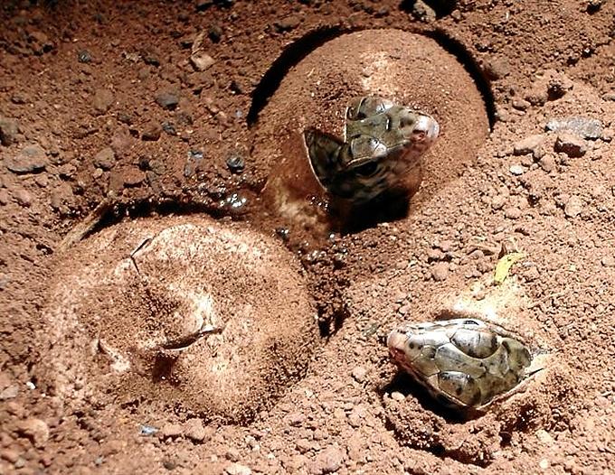 Los lagartos han nacido en La Gomera.