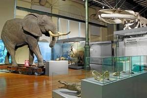 Museo Nacional de Ciencias Naturales. / Foto: CSIC / Europa Press