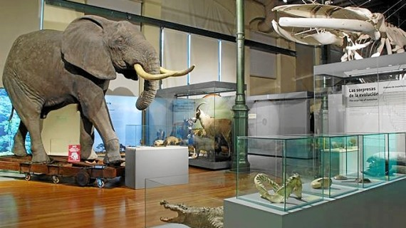 """El Museo Nacional de Ciencias Naturales abre el ciclo """"Noches de cine en el MNCN"""""""