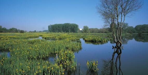 Confederación Hidrográfica del Guadalquivir licita la sexta fase para mejorar el saneamiento en Doñana