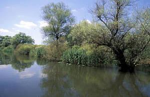 Se trata de una solución a los problemas surgidos por la extracción del acuífero de Doñana.