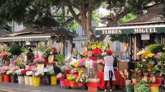 Agricultura celebra la reducción del tipo impositivo del IVA para flores y plantas