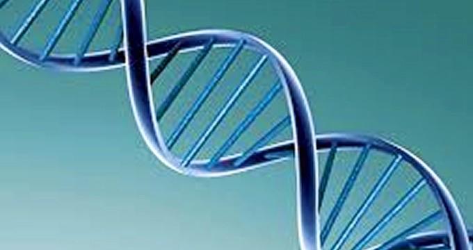 Un científico español, seleccionado como Joven Investigador por la Organización Europea de Biología Molecular