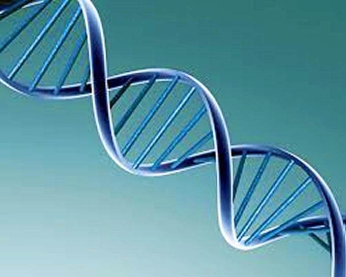 Cortés estudia el ADN.