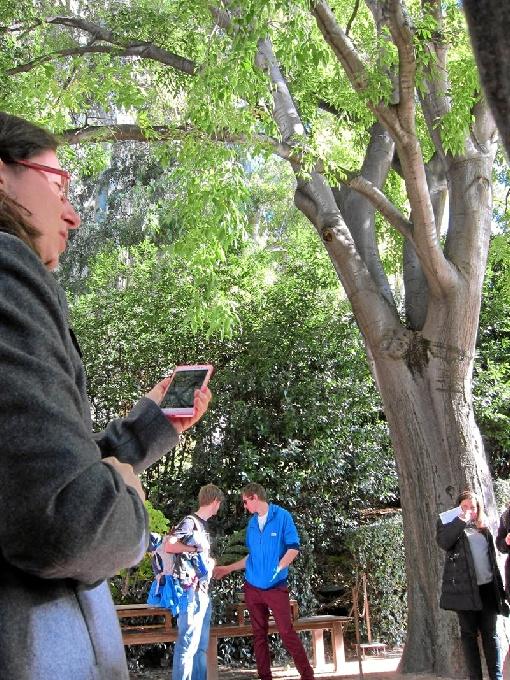 El CSIC lanza una aplicación móvil para identificar árboles en Península y Baleares