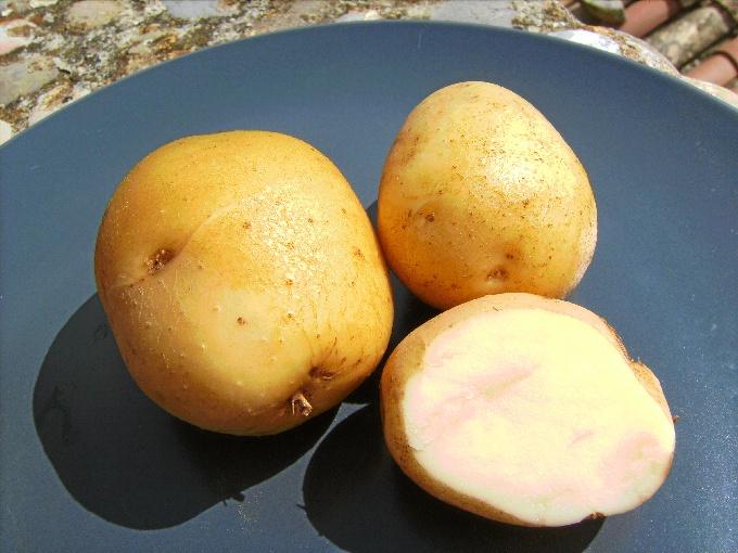 La patata se convierte en la protagonista de unas jornadas sobre innovación culinaria en Álava
