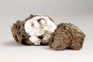 Fragmentos volcánicos o 'restingolitas'.