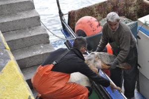 Los pescadores sacan del barco a la tortuga. / Foto:  CSIC / C. Vázquez