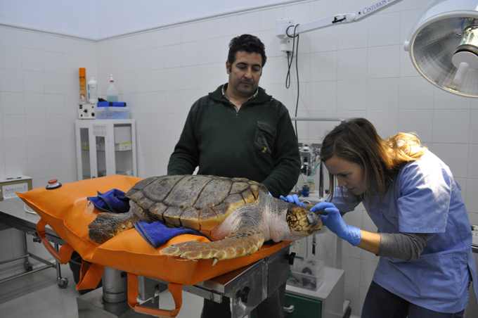La veterinaria examina al animal. / Foto: CSIC / C. Vázquez