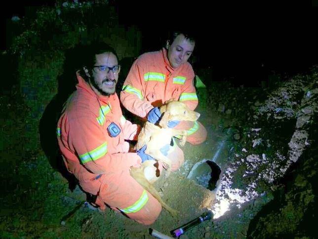 Bomberos rescatan a un perro atrapado en una tubería subterránea en la localidad valenciana de Casinos