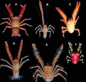 Algunos cangrejos identificados